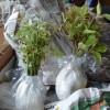 2019-től szigorodnak a külföldről behozott növényekre vonatkozó szabályok