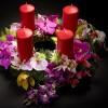 Advent orchideákkal- őszi kiállításajánló