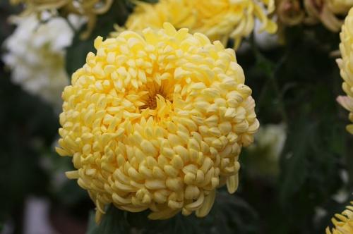 flower-606331_640