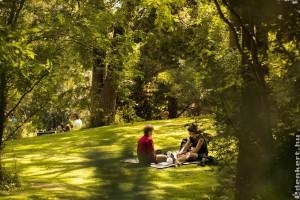 Császárfa, oxyfa, smaragdfa: gyors növekedésű csodafák lesznek a megmentőink?