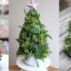 Örökzöld karácsonyfa pozsgás növényekből