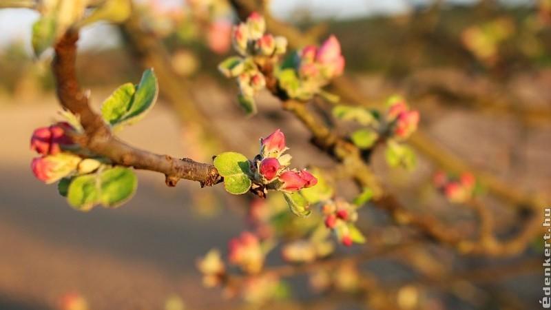 Betiltanák a bio kertekben is alkalmazható réz hatóanyagú permetszereket