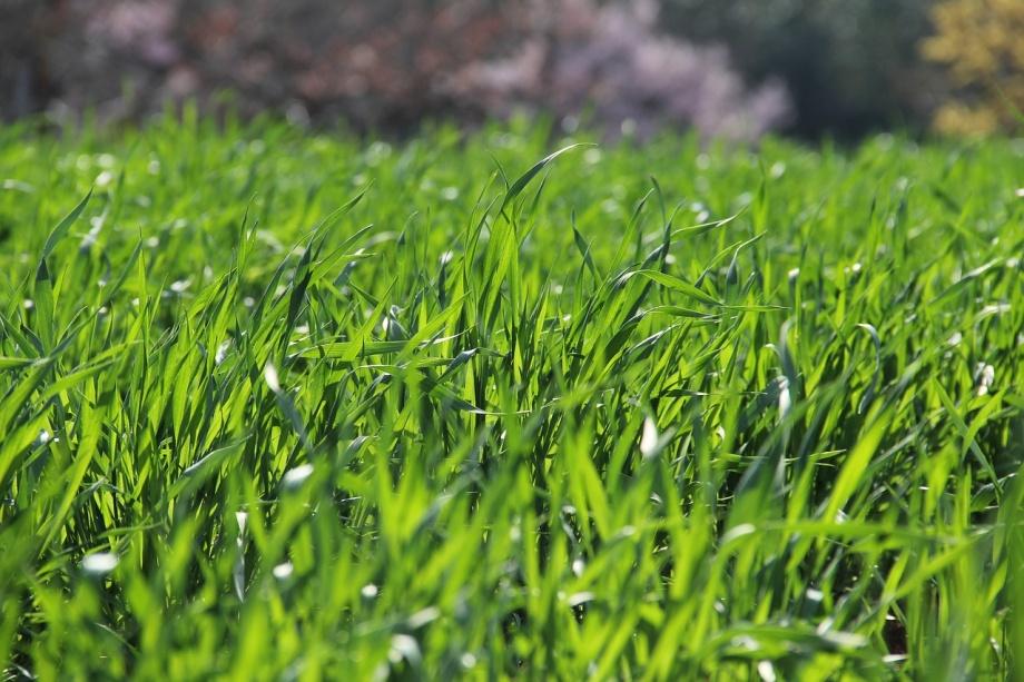 grass-3269760_1280