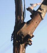 Kertápolás márciusban - tanácsok Bálint Gazdától