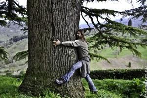 Gyógyító fák: a tölgytől a varsafáig