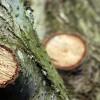 Metszési sebek helyes kezelése: sebzáró anyagok a piacon