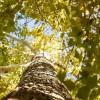 Március 21.: ma van az erdők világnapja