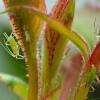 A növényeknél a szárazság jelenti a legfőbb gondot