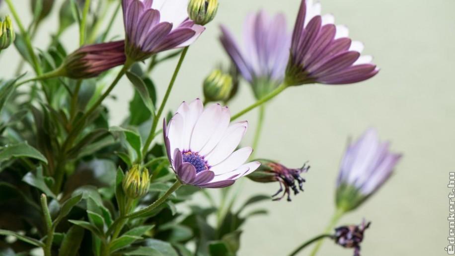 Ezeket a virágokat ültesd napos teraszra!