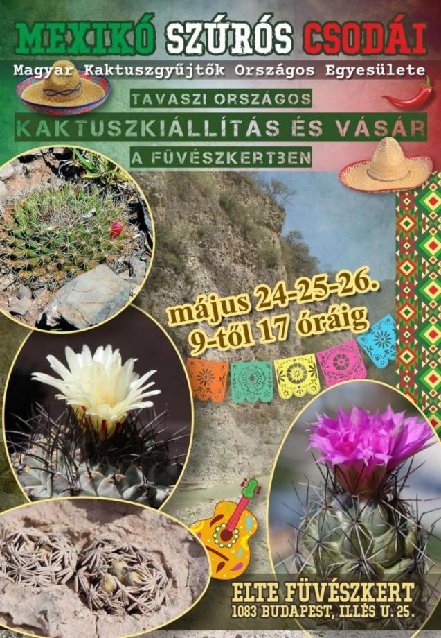 kaktusz2019