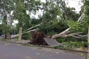 Figyeljük a balesetveszélyes fákat Budapest közterein!
