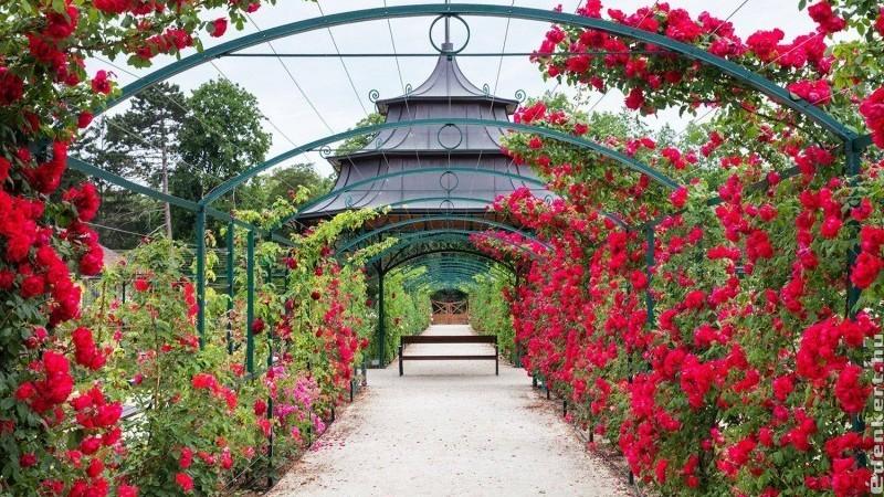 Ma nyitja kapuit hazánk legrégibb rózsakertje Fertődön
