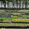 A legnagyobb hazai kertészetek: Oázis, Newgarden, Fitoland