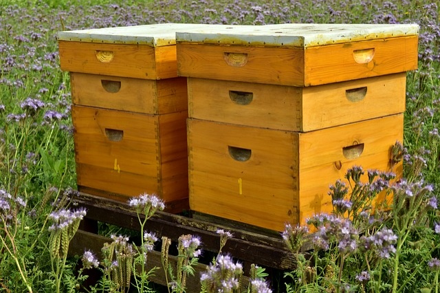 beehive-3703434_640