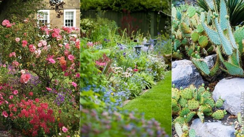 Variációk nyári kertre: az Oázis Kertészet 2019-es ajánlója