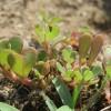 Nyári gyomnövények: felismered őket?