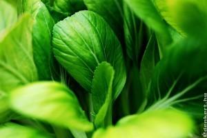 Pak-choi, avagy bordás kel házikertben is termeszthető