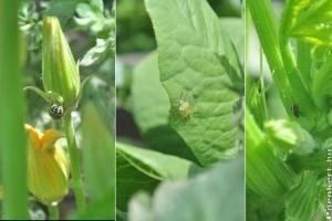 Növényvédelmi előrejelzés: július a kertekben (poloskák, gombák, molyok)