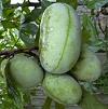 Ismeri a Pawpaw gyümölcsöt?