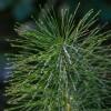 Zsurlófőzet: gombaölő szer, ami biokertben is használható