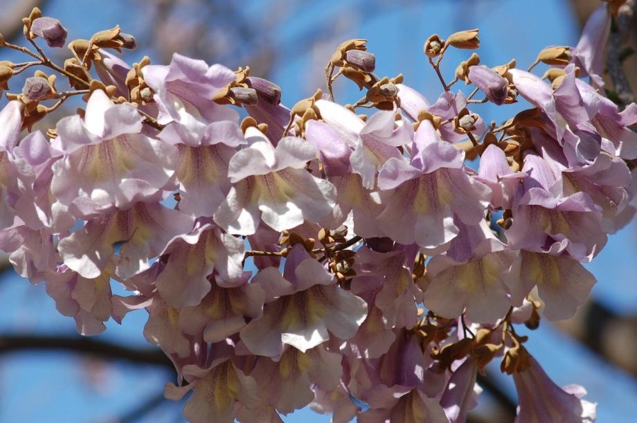 bloom-4095338_1280