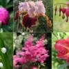 10 kedvenc évelő virág, amely szeptembertől szaporítható