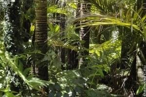 Az amazóniai erdőirtás jelentősen növeli a térség hőmérsékletét