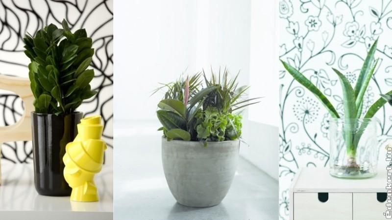 Top 10 szobanövény: ezek a kedvenc levéldíszek
