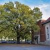Egy kaposvári tölgyfa lett 2019 fája