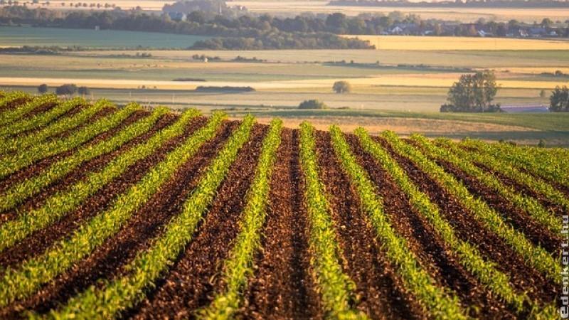 Az intenzív mezőgazdálkodás elpusztítja a természetet!