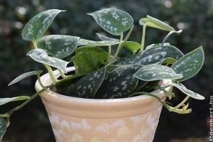 A légtisztító szobanövényeknél hatékonyabb egy szellőztetés