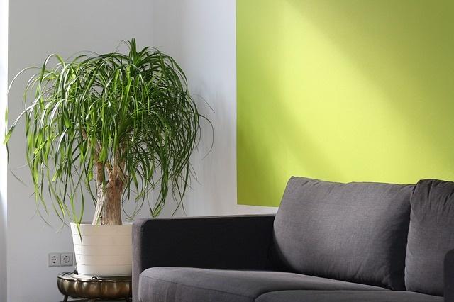 Légtisztító szobanövények - csak mítosz?