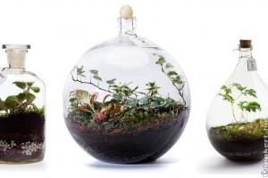 Florárium: miniatűr önfenntartó esőerdők a lakásban