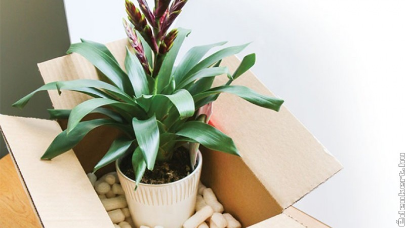 Hogyan költöztessük a növényeinket?