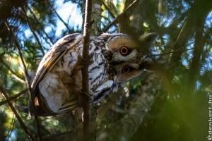 2020 vadvirága, fája, gombája, rovara, hüllője és madara