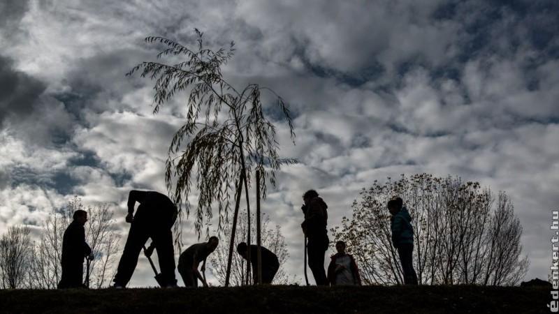 150 000 fa ültetését tervezi 2020-ban a 10 millió Fa közösség