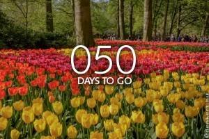 Visszaszámolnak Keukenhofban: hamarosan nyit a hagymás virágok paradicsoma