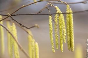 2020: megkezdődött az idei pollenszezon