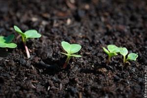 Februárban vethető zöldségek
