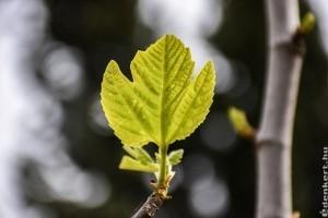 Inkább tavasszal ültessük az alábbi növényeket