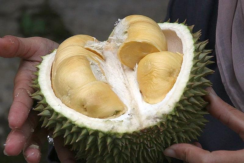 egzotikus_gyumolcs_durian
