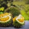 Egzotikus gyümölcs a durián, csak ne lenne olyan büdös
