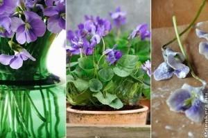 Ibolya: tavaszi virágdísz a kertből ingyen