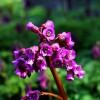 Március legszebb kerti virágai