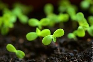 Növényvédelemi tennivalók a kertben - 2020 március