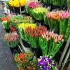 Ajándék virág a kertészektől a krízisben dolgozóknak