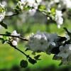 Kertészeti holdnaptár 2020 tavasz