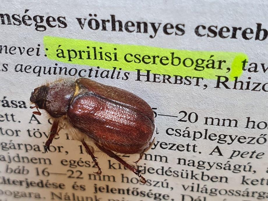 aprilisi_cserebogar