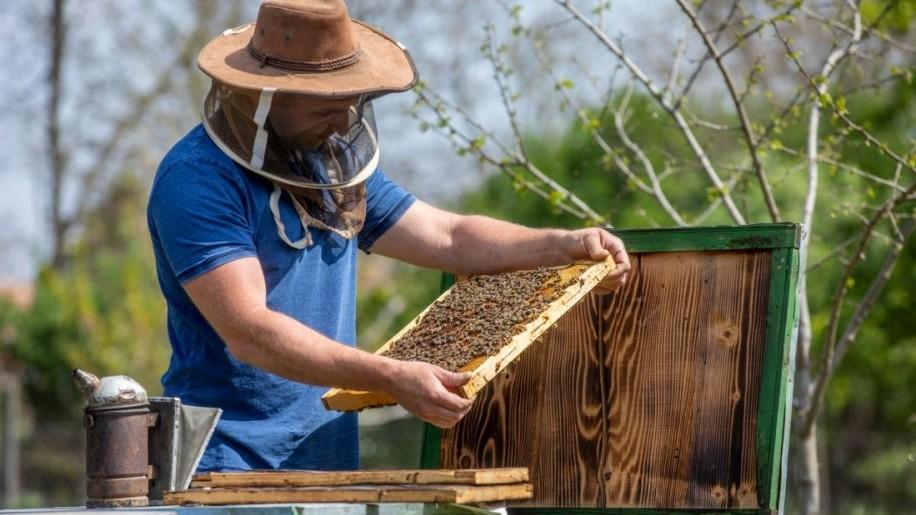 Elkezdődött a méhészszezon