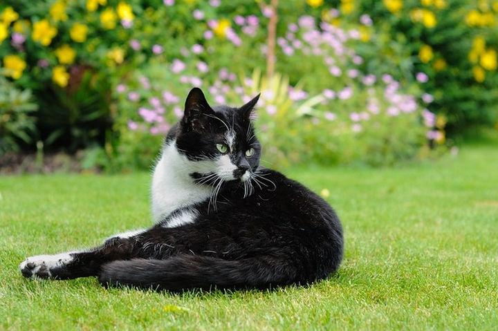 macska_kertben